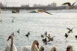 Miejscowa fauna wodno-lądowo-powietrzna